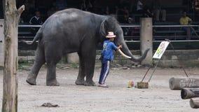 """CHIANG MAI, †de TAILANDIA """"26 de julio de 2018: Los elefantes de Asia muestran la pintura en campo del elefante de Maetang almacen de video"""