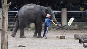 """CHIANG MAI, †de TAILANDIA """"26 de julio de 2018: Los elefantes de Asia muestran la pintura en campo del elefante de Maetang metrajes"""