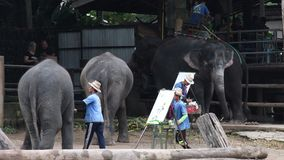 """CHIANG MAI, †della TAILANDIA """"26 luglio 2018: Gli elefanti dell'Asia mostrano la pittura nel campo dell'elefante di Maetang stock footage"""