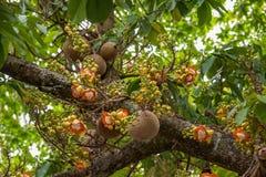 Chiang Mai, albero della Tailandia Suthep Doi Suthep Buddha Fotografia Stock