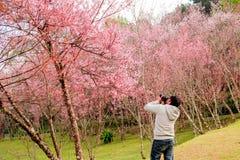 Chiang Mai, Datum 14-januari-18 van Thailand Toeristen neemt foto's W royalty-vrije stock fotografie