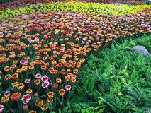 Chiang Mai Flower Festival Royalty Free Stock Image