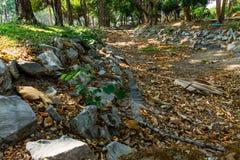Chiang Mai gräsplanstad arkivfoton