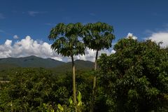 Chiang Mai mountain view with amazing cloudy blue sky and papaya trees. Thailand countryside royalty free stock images