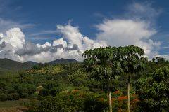 Chiang Mai mountain view with amazing cloudy blue sky and papaya trees. Thailand countryside royalty free stock photography