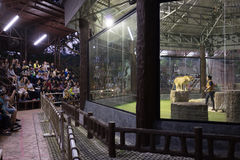 Chiang mai night safari Royalty Free Stock Photo