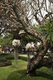Chiang Mai pacin świątynia zdjęcie stock