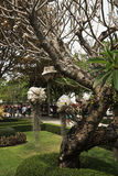 Chiang Mai pacin Temple Stock Photo