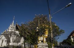 Thai temple in chiangmai, Thailand royalty free stock image