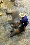 chiang mai region Thailand słoni Zdjęcia Stock