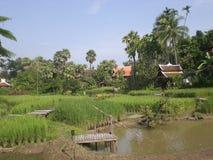 Chiang Mai rice mandarin Royalty Free Stock Image