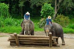Chiang Mai September 11, 2014 : L'éléphant montre la compétence aux assistances Photos stock