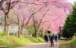 CHIANG MAI, TAILÂNDIA 16 de janeiro: Fotógrafo que toma a foto do th Fotos de Stock Royalty Free