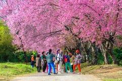 CHIANG MAI, TAILÂNDIA 16 de janeiro: Os turistas que admiram o beaut Fotos de Stock Royalty Free