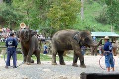 CHIANG MAI, TAILÂNDIA _ 6 DE MAIO DE 2017: Mostra diária do elefante - o elefante está pondo o chapéu sobre a cabeça do ` s do ma Imagem de Stock Royalty Free