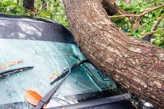 CHIANG MAI, TAILÂNDIA - 25 DE NOVEMBRO: Árvore caída em um carro em seguida Imagens de Stock Royalty Free