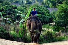 Chiang Mai, Tailândia: Elefante da equitação do Mahout Foto de Stock Royalty Free