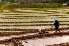 Chiang Mai, Tailandia: Agricoltori del riso dell'8 ottobre 2016 sul giacimento del riso sopra Fotografia Stock