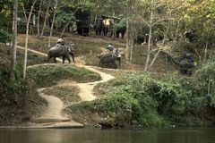 CHIANG MAI, TAILANDIA - 23 de febrero de 2018: El grupo de turistas monta en elefantes en el río de Mae Ta Man en la parte norteñ Fotos de archivo