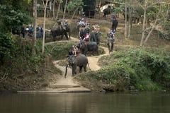 CHIANG MAI, TAILANDIA - 23 de febrero de 2018: El grupo de turistas monta en elefantes en el río de Mae Ta Man en la parte norteñ Imagenes de archivo