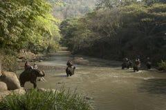 CHIANG MAI, TAILANDIA - 23 de febrero de 2018: El grupo de turistas monta en elefantes en el río de Mae Ta Man en la parte norteñ Fotografía de archivo