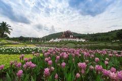 Chiang Mai, Tailandia a Flora Ratchaphruek Park reale Fotografia Stock
