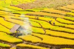 CHIANG MAI, TAILANDIA, IL 18 NOVEMBRE: Il harv non identificato degli agricoltori Fotografia Stock