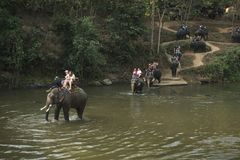 CHIANG MAI TAJLANDIA, Luty, - 23, 2018: Grupa turyści jedzie na słoniach przy Mae Ta mężczyzna rzeką w północnej części Tajlandia Zdjęcie Royalty Free