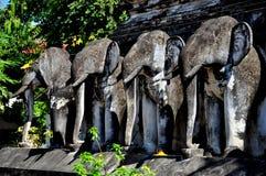 Chiang Mai TH: Elefantstatyer på det thailändska tempelet Royaltyfri Foto