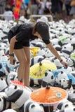 CHIANG MAI, THAÏLANDE le 19 mars 2016 : Tour du monde de pandas par WWF Image stock
