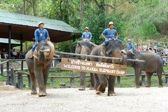 "CHIANG MAI, THAILAND-†""am 6. Mai 2017: Tägliche Elefantshow am 6. Mai 2017 am MaeSa-Elefantlager, Chiang Mai, Thailand Stockbild"