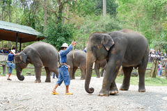 "CHIANG MAI, THAILAND-†""am 6. Mai 2017: Tägliche Elefantshow am 6. Mai 2017 am MaeSa-Elefantlager, Chiang Mai, Thailand Lizenzfreies Stockfoto"