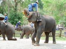 "CHIANG MAI, THAILAND-†""am 6. Mai 2017: Tägliche Elefantshow am 6. Mai 2017 am MaeSa-Elefantlager, Chiang Mai, Thailand Lizenzfreie Stockfotos"