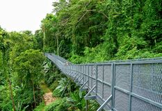 Chiang Mai, Thailand, August 24, 2017: Tree Canopy Walkway, The royalty free stock image