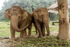 Chiang Mai, Thailand. Elephant Nature Park Royalty Free Stock Photography