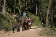 CHIANG MAI, THAILAND - 22 9: Das Elefant- und Reisendtrekking im Wald am Samueng-Elefant-Lager im Kaew Ta Chan Stockbilder