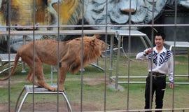 Chiang Mai, Thailand - December 12, 2013 , Tiger Show at Chiang Mai Night Safari Stock Image