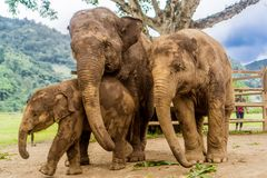 Chiang Mai, Thailand. Elephant Nature Park Royalty Free Stock Photos