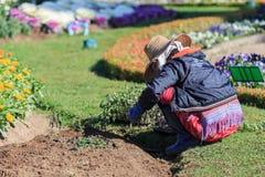 Chiang Mai Thailand - Januari 20,2017: Trädgårdsmästare som planterar flöde royaltyfria bilder