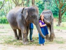 Chiang Mai Thailand - Januari 3, 2018: Turister med elefanter på E royaltyfri foto