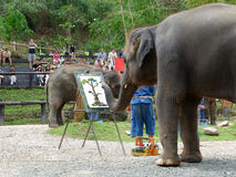 CHIANG MAI, THAILAND  MAY 6, 2017: The elephant painting show at Maesa elephant camp, Chiang mai, Thailand royalty free stock photos