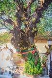 Chiang Mai, Thailand - 3. Mai 2017: Mehr als 100 Jahre alt von b Stockbild