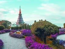 CHIANG MAI, THAILAND - NOVEMBER stock foto's