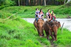 CHIANG MAI THAILAND - November 13, 2015: Elefanter och mahouts, medan eskortera turister för att rida elefanter längs floden arkivfoton