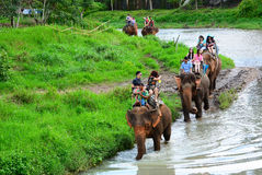 CHIANG MAI,THAILAND - November 13, 2015:Elephants and mahouts, while escorting tourists to ride elephants along the river. CHIANG MAI,THAILAND - November 13 Royalty Free Stock Photos