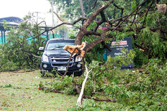 CHIANG MAI, THAILAND - NOVEMBER 25 : Fallen tree on a car after Royalty Free Stock Photo