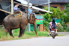 CHIANG MAI, THAILAND - November 13, 2015: Olifanten en mahouts, terwijl het begeleiden van toeristen om olifanten te berijden Stock Afbeelding