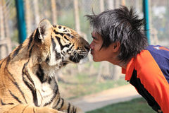 Chiang Mai thailand tiger Fotografering för Bildbyråer