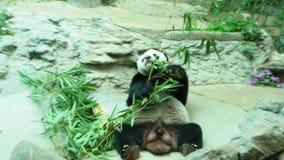 Chiang Mai Zoo, Chiang Mai Province, Noordelijk Thailand stock video