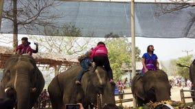 Chiang Rae, Tailândia - 2019-03-13 - festival da festa do elefante - menina em escaladas vermelhas na cabeça do elefante video estoque